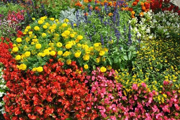 Уход за однолетними цветами - простые правила