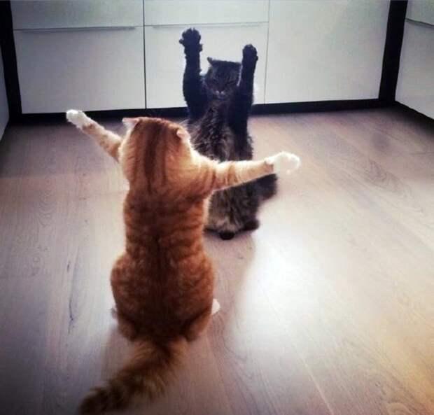 Прикольные котики коты, прикол, фото