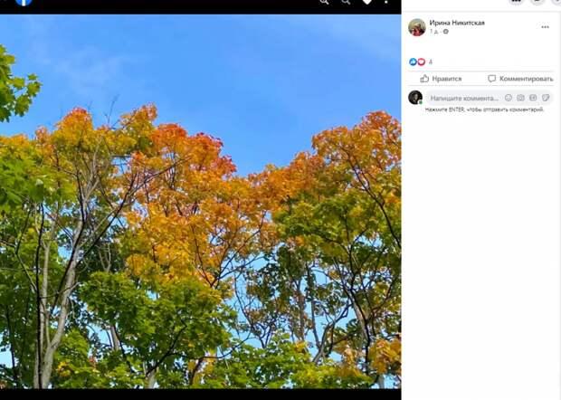 Фото дня: осень подкрадывается в Свиблово