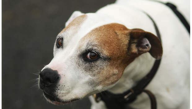 Объявились хозяева собаки, которая 2 недели была заперта в квартире