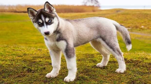 Учёные подтвердили способность собак испытывать ревность