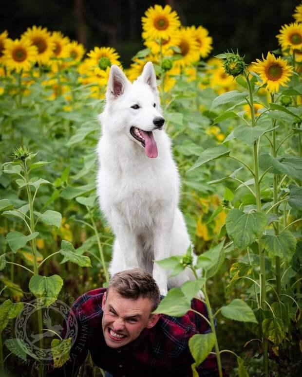 Собаки + цветы = безудержное веселье. Так думала хозяйка трёх собак, но всё пошло не по плану