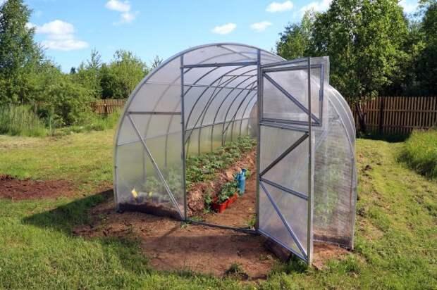 Что делать, если почва в теплице позеленела или покрылась мхом?
