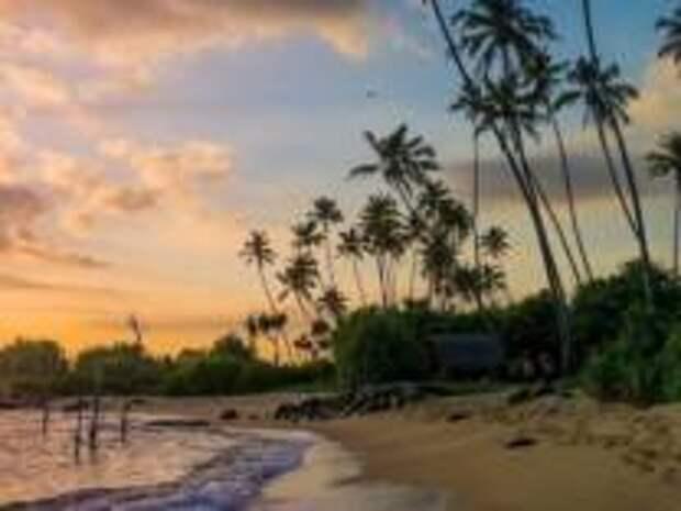 Хозяин кафе на Шри-Ланке приютил  застрявших из-за пандемии туристов