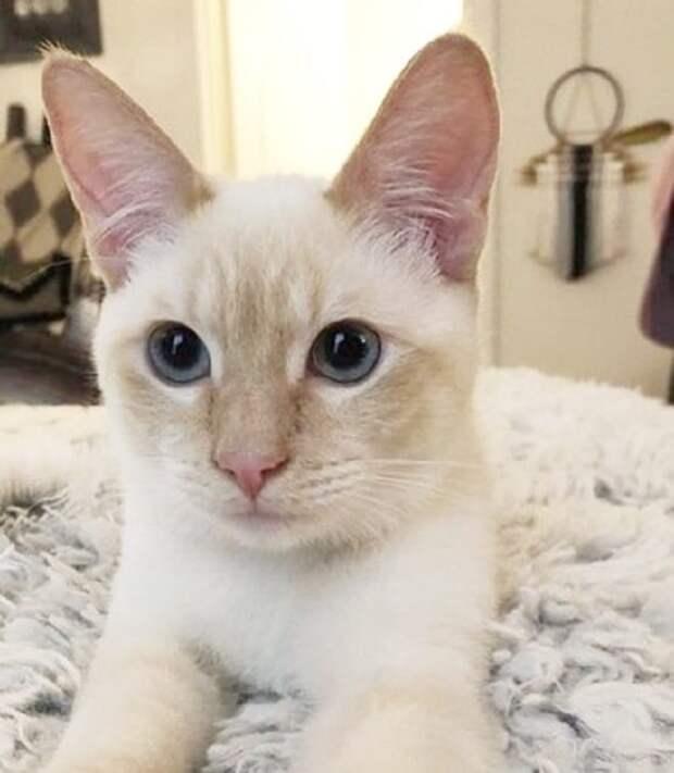 Красивого кота отказывались брать из приюта, потому что он был болен. Одна девушка не побоялась его диагноза