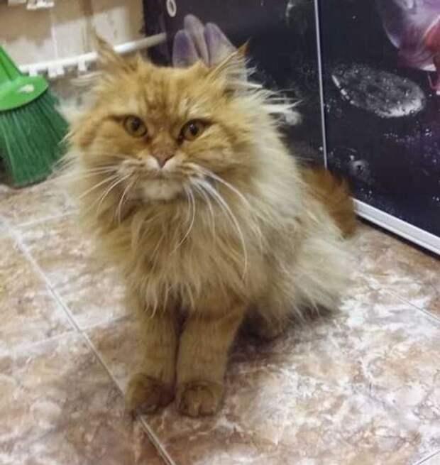 Доказательства того, что если у вас есть кот, то будет еще один
