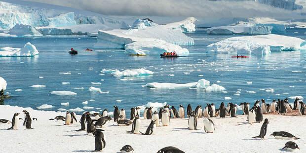 Возле Антарктиды нашли смертельную угрозу