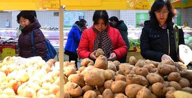 Китайский метод посадки картофеля обеспечивает невероятную урожайность