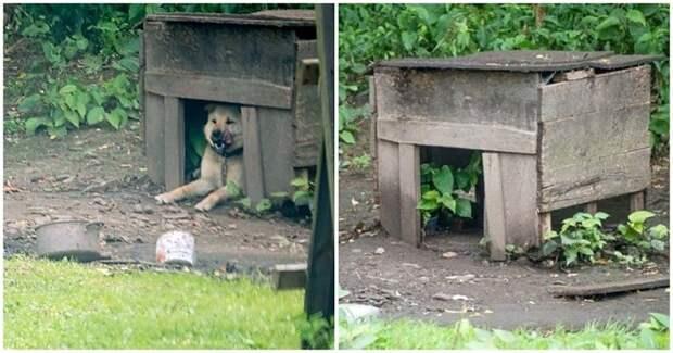 Пес в бкдке