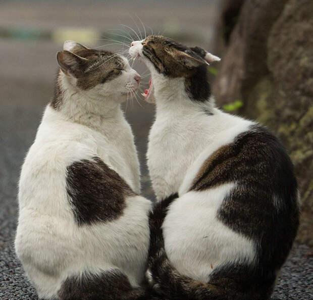 Бездомные кошки Токио: из Японии с любовью животные, коты, кошки, фотография, япония