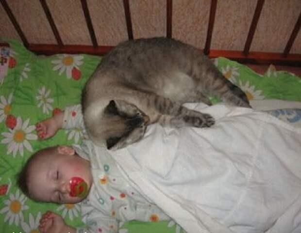Кот запрыгнул в коляску к моему сыну, чтобы успокоить его