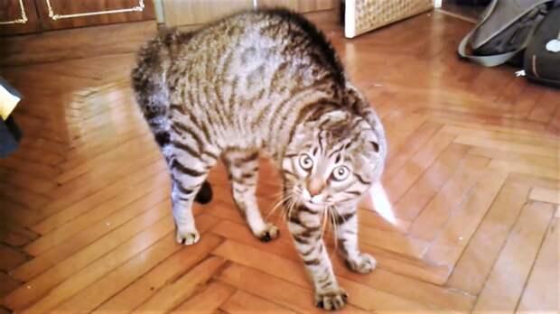 Прикольные кошки и собаки ( Поломанные коты и поцелуйчики )