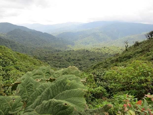 Самые значимые леса мира