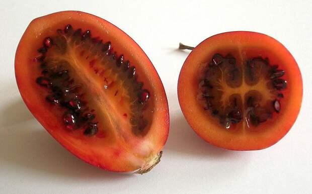 Цифомандра – томатное дерево