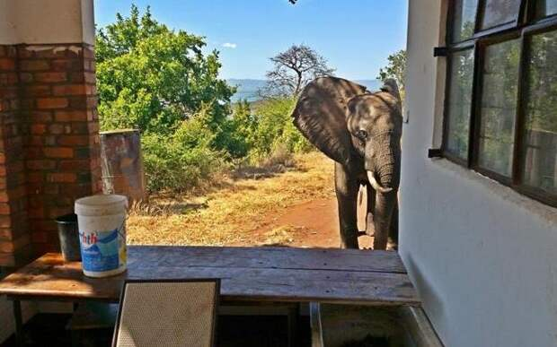 The moment when Ben the elephant appears to be seeking help