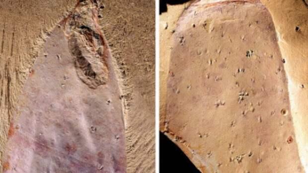 В Китае найден голый инопланетянин, которому больше 500 млн лет