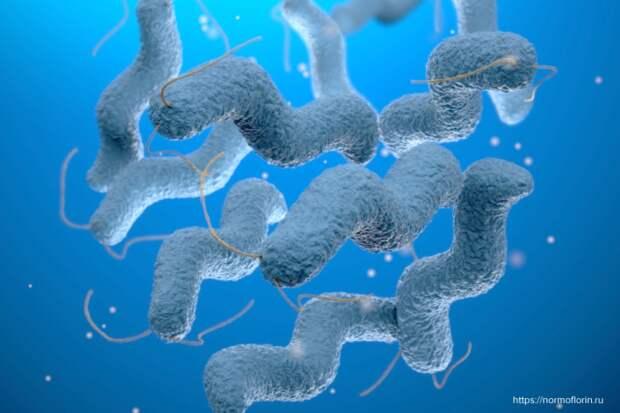 Вирусолог оценил гипотезу о возникновении смертельных вирусов в организме человека