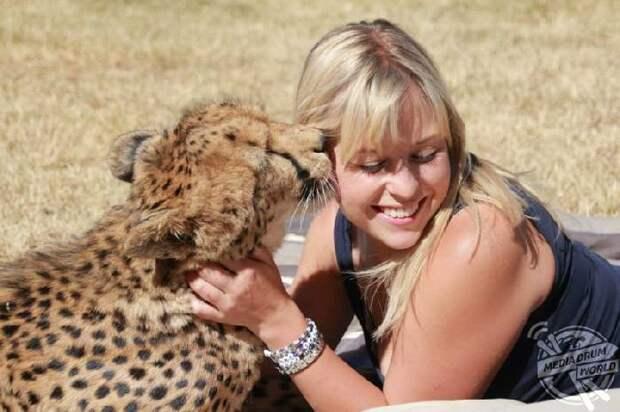 Спасенный котёнок гепарда теперь её самый лучший друг