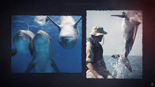 Дельфиний спецназ: на что способны военные морские животные