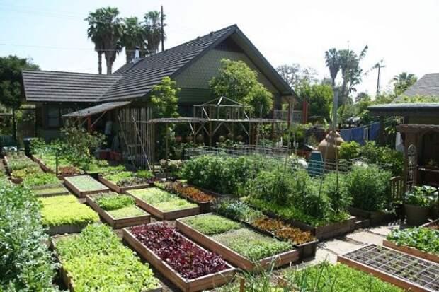 Городская ферма Urban Homestead