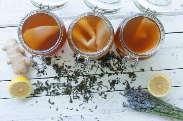 чайный гриб польза