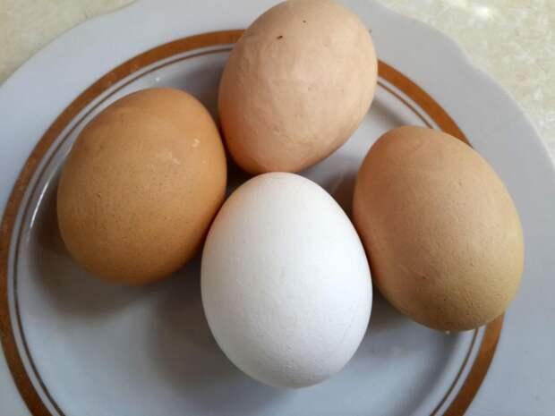 Красим яйца в березовых листьях