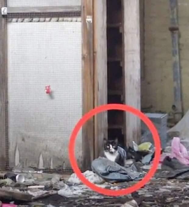 В заброшенной больнице давно никто не работал. Вот только здесь лежали котята, которых необходимо было спасти