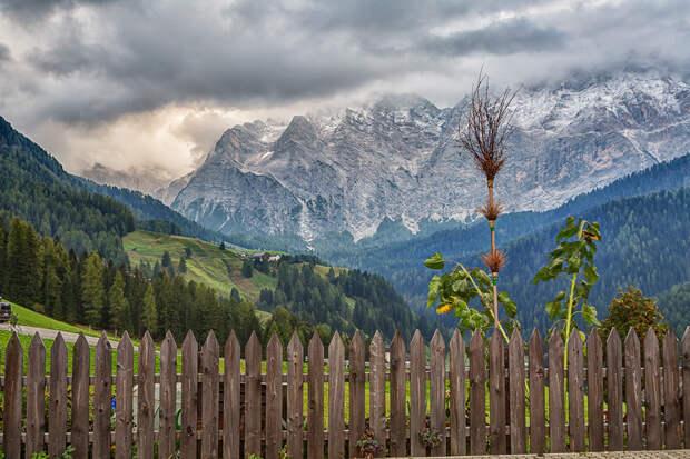Альпийская пастораль