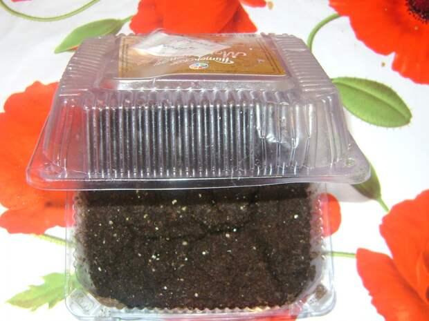Посевы петунии в пластиковые контейнеры под снег и на торфяные таблетки