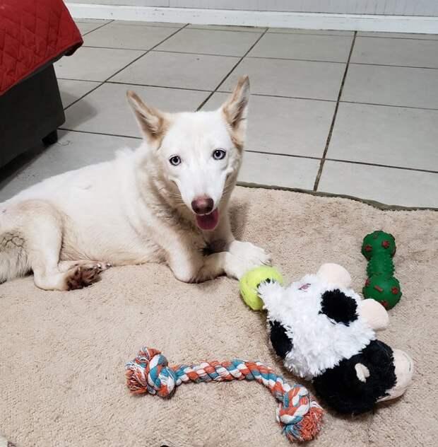Когда ее нашли в клетке у дороги, никто не мог поверить, что у собаки могут быть такие лапы