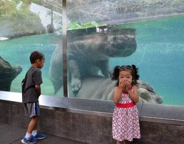 zoopark-zveri-3