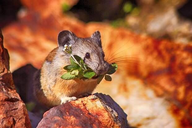 Из-за теплой зимы в Удмуртии может увеличиться численность мышей