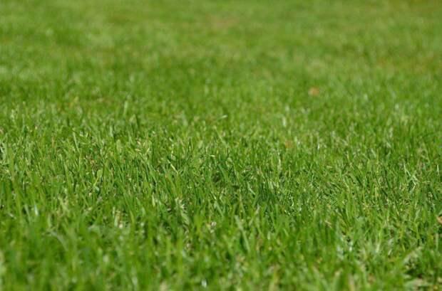 газон фото: открытый источник