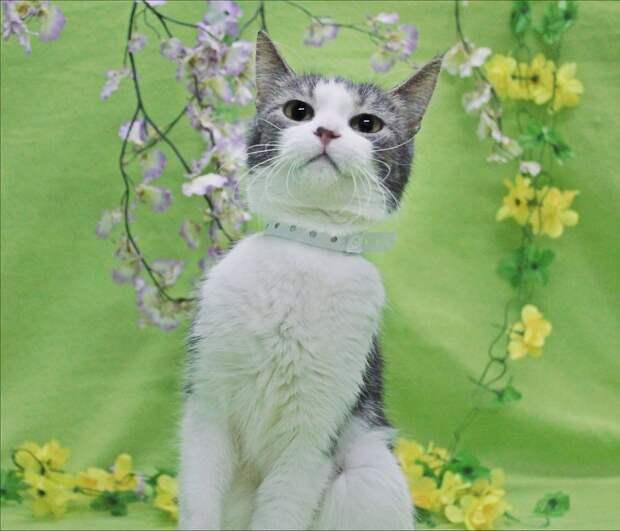 Волшебник для приютского цветочка!!!!!
