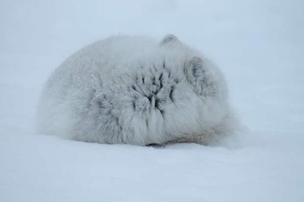 Животное неизвестного вида попало в объектив видеокамеры на Дальнем Востоке
