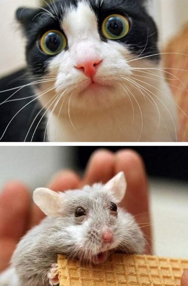 Невероятно эмоциональные фото животных)