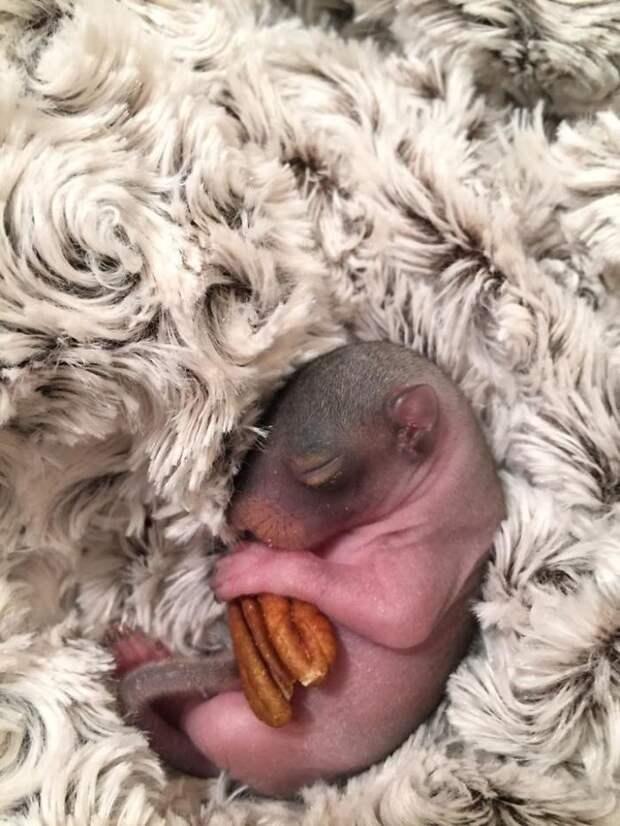 Люди спасли новорожденного бельчонка, но он вырос и отказался быть белкой