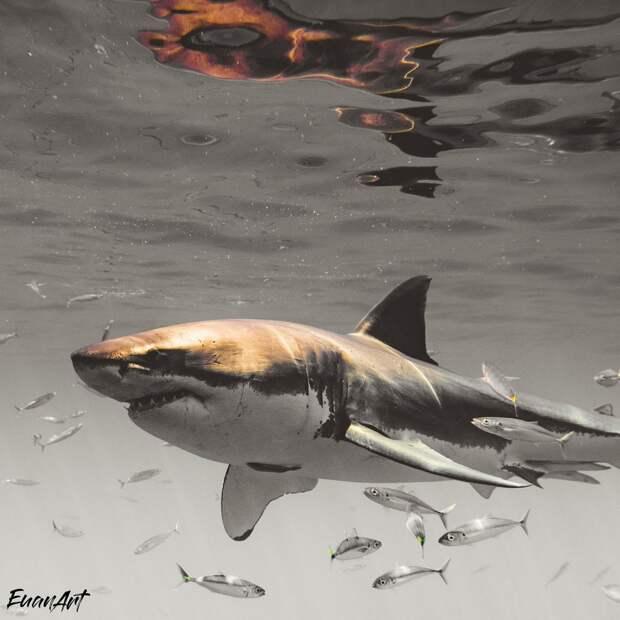 Экстремальные снимки больших белых акул