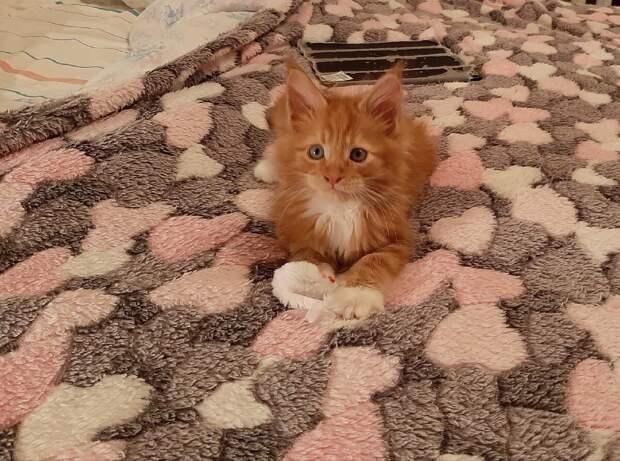 """""""Родители просили подарить им котенка, а через несколько дней выставили его на газетке в подъезд"""""""