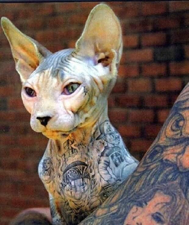 5 причин, по которым нужно запретить татуировки на животных