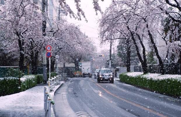 В Токио впервые за 10 лет выпал снег в конце марта