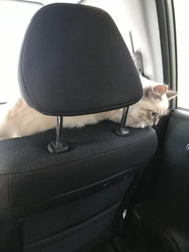 Наш котик боялся, что его забудут в гостях, поэтому сам себя собрал