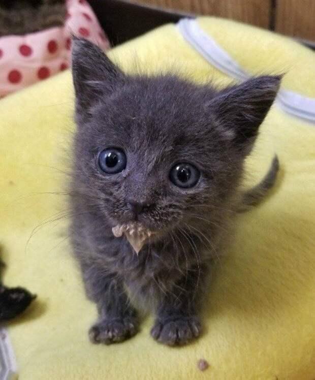 По берегу реки полз худощавый котенок, пища что есть сил