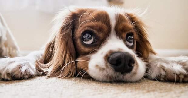 Разговор с друзьями нашими меньшими: как собаки воспринимают людскую речь
