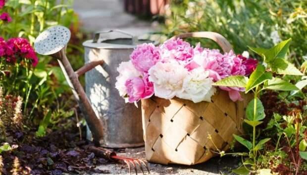 Пряные травы, овощи или цветы? Маленький садик для небольшого участка