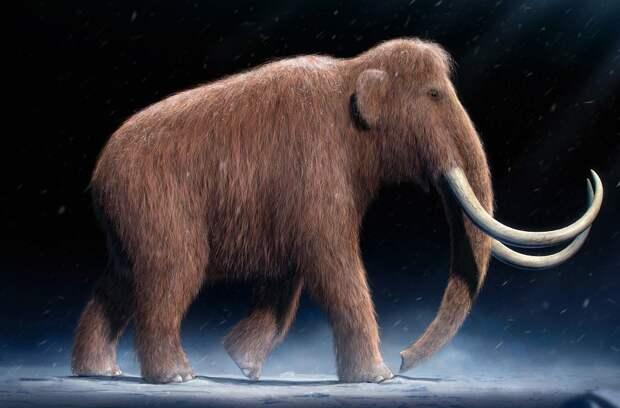 Учёные приступили к изучению останков мамонта, найденного на Ямале