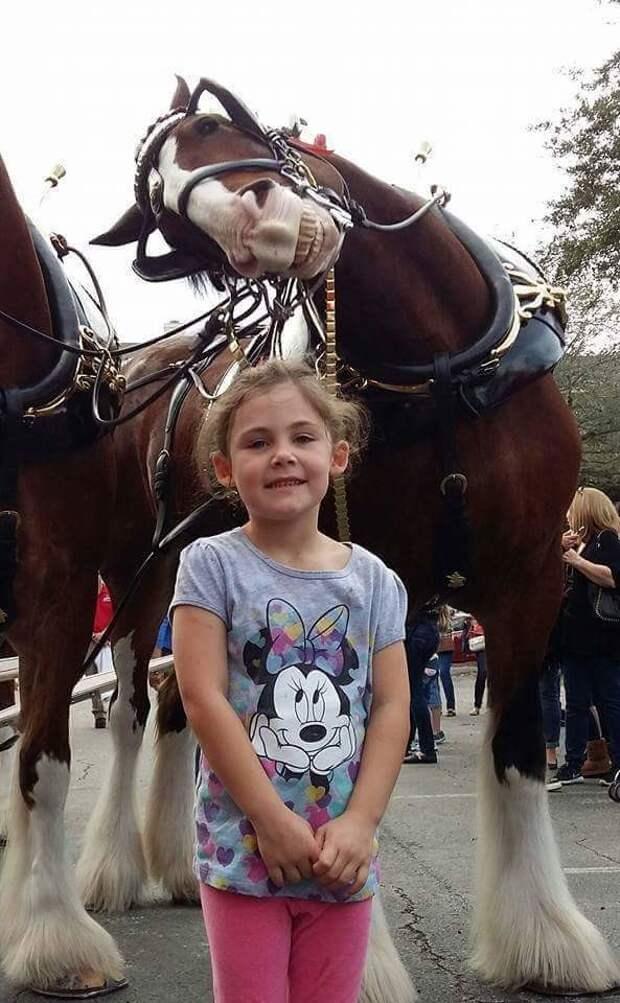 Смеющаяся лошадь стала героиней интернета дети, животные, забавно, лошади, мем, мило, улыбка, фото