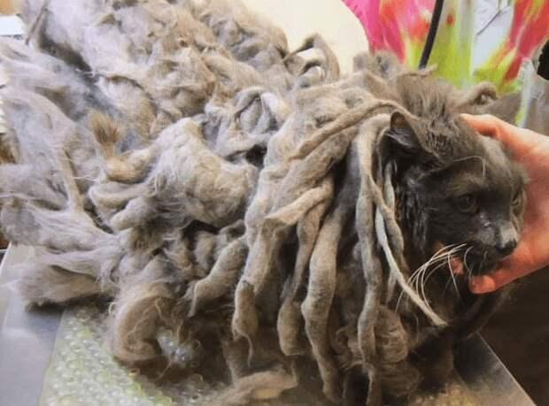 Странное лохматое существо подкинули в приют для животных
