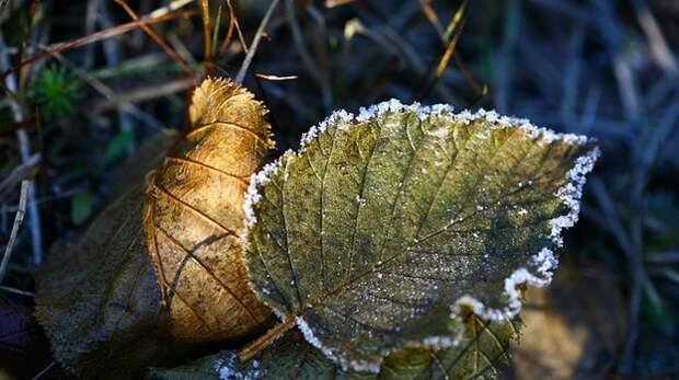 Ночные заморозки ждут крымчан в октябре