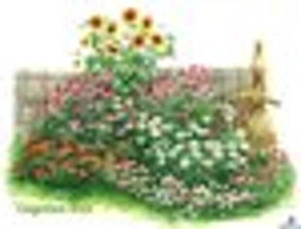 Композиции для хорошо освещенных и солнечных мест